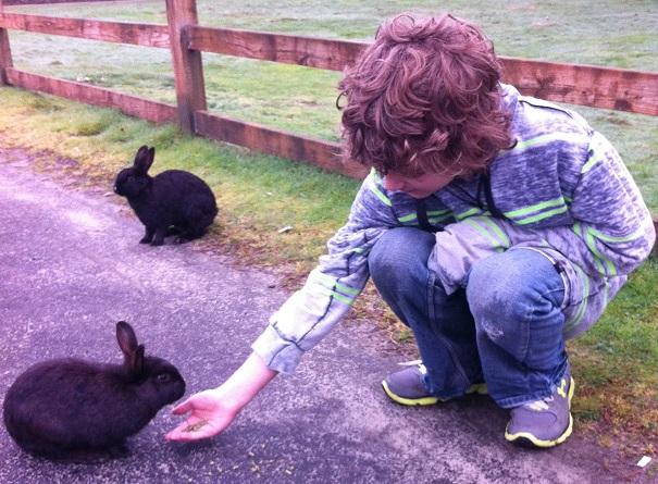 Rabbits_Doogan