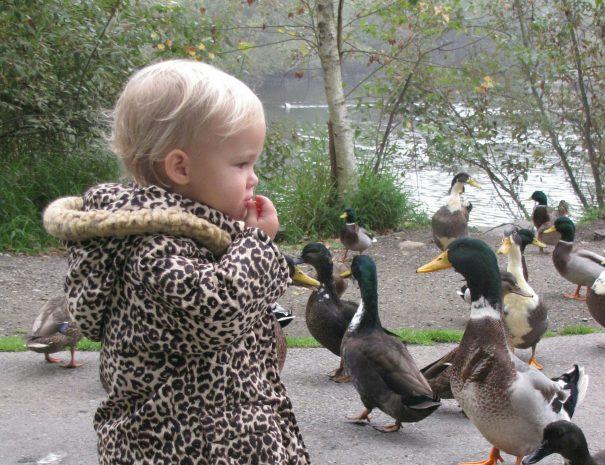 Ducks_photoRachaelBrandon