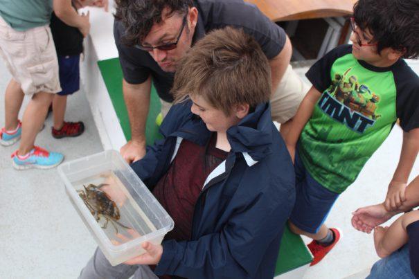 ecology sail crab