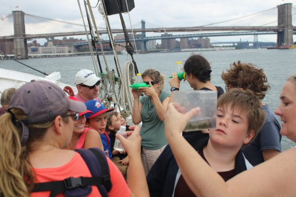 ecology sail water
