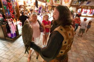 Medieval Times Falcon