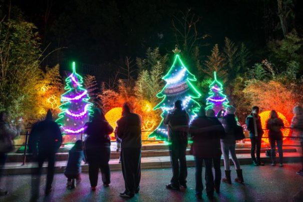 la-zoo-lights-trees
