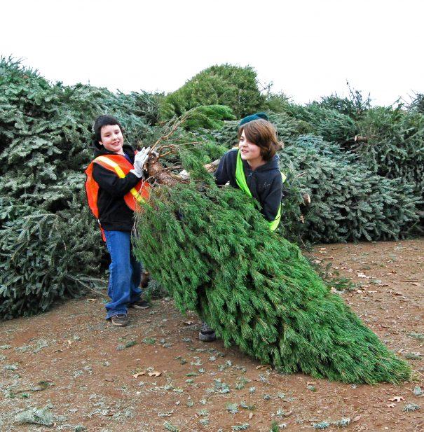 5 Best Christmas Tree Farms Near Austin, Texas