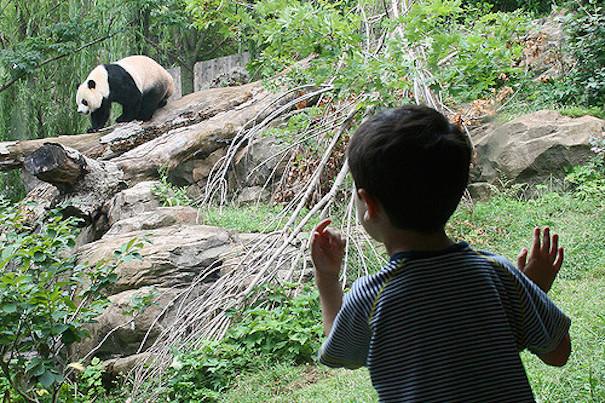 boy-and-panda-at-zoo-woodleywonderworks-flickr