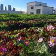Brooklyn Grange urban rooftop farm