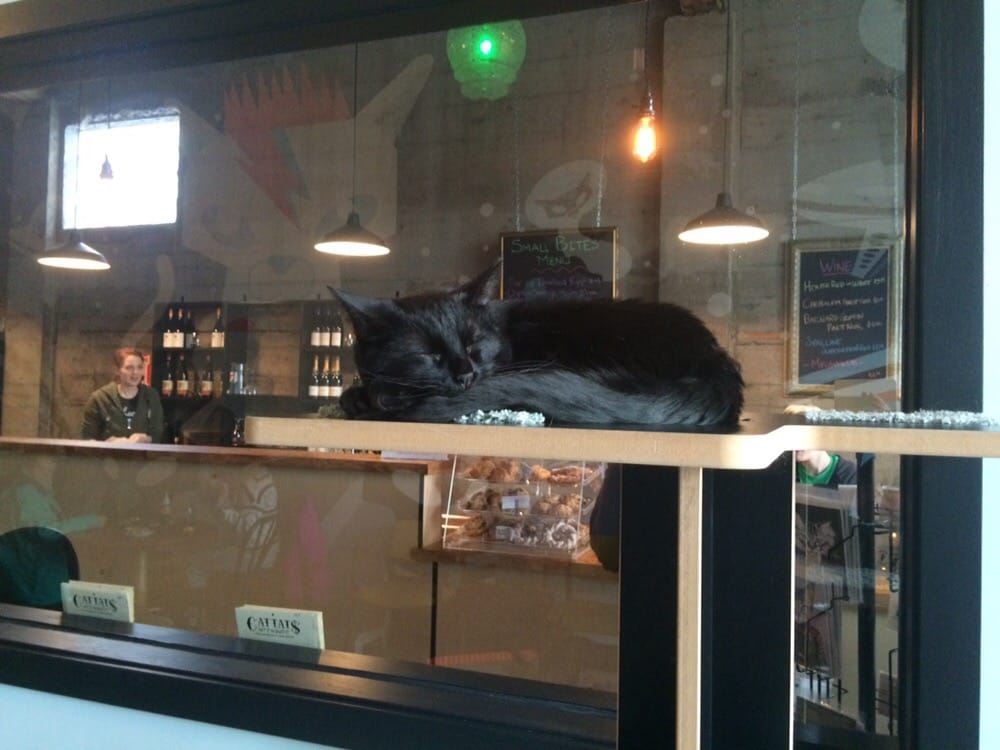 cat-cafe-brody-l-via-yelp
