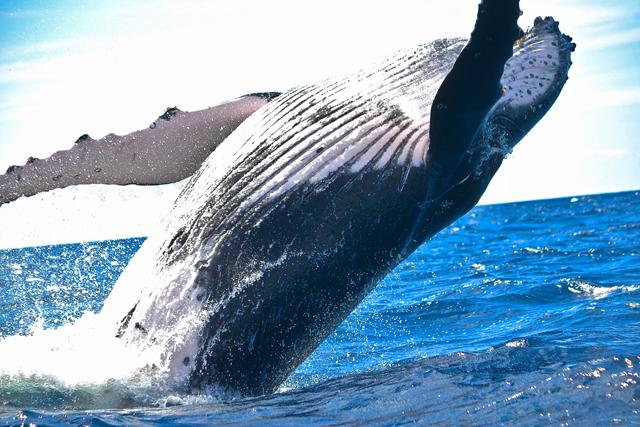 whale-watchin1