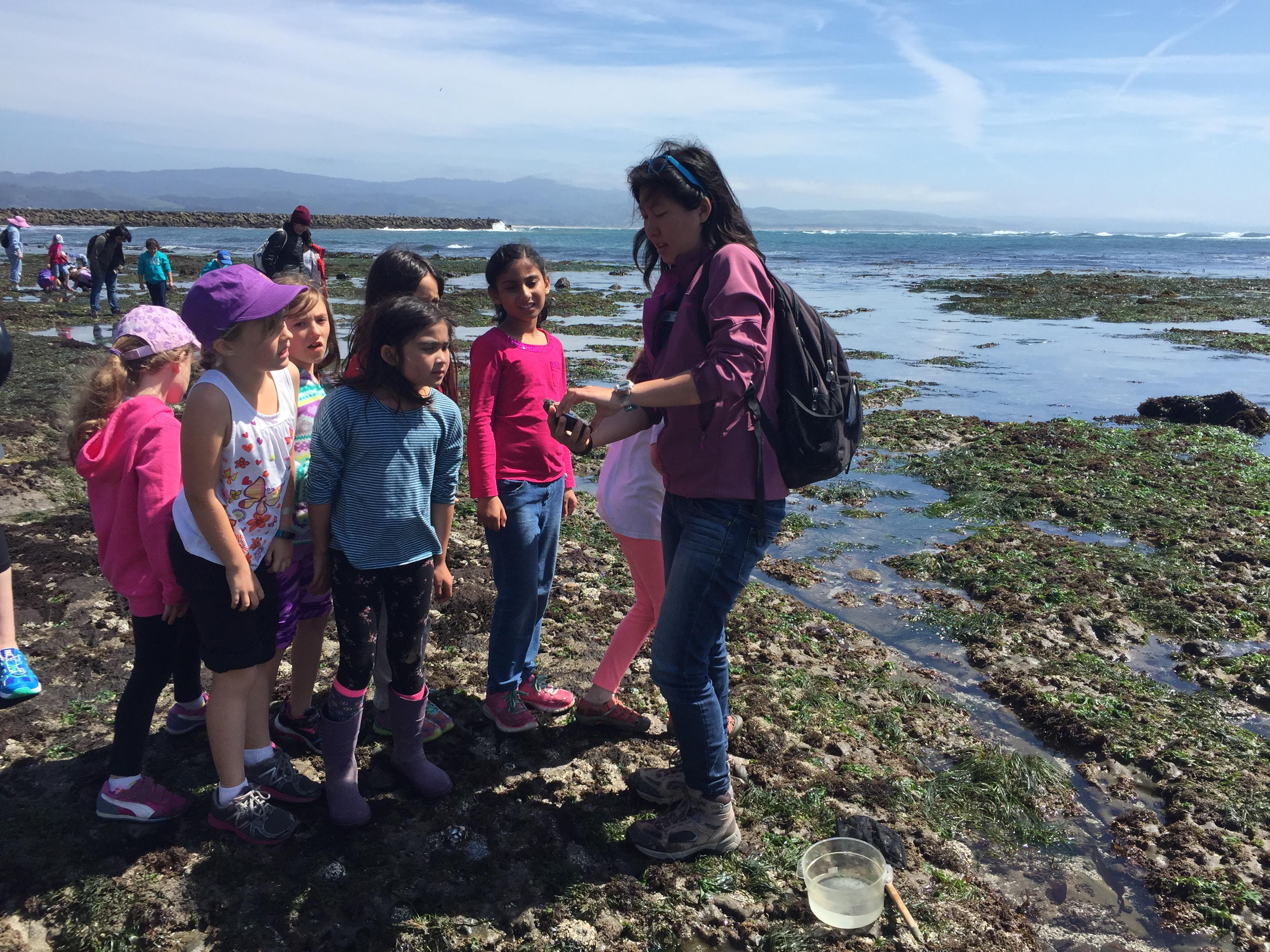 See the Sea Life at These Nearby Tide Pools