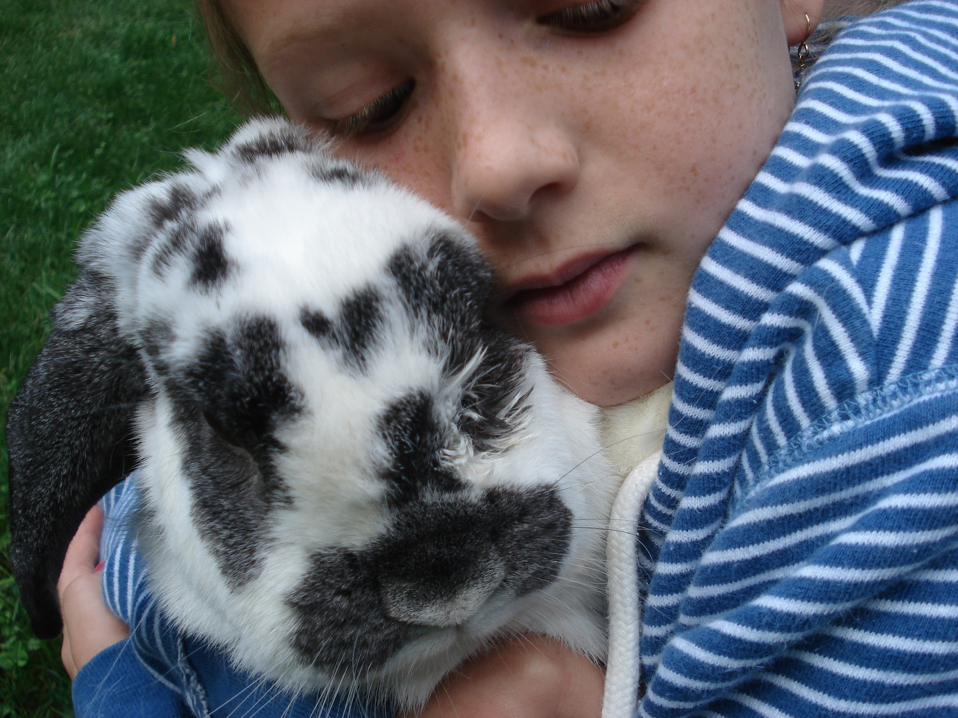 The Best Pets For Kids If You Don T Want A Dog Or Cat