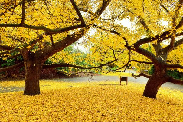 Top 10 Places To See Fall Leaves In Los Angeles Ca