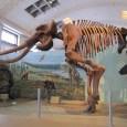MammothSkeleton-cc-Bryant Olsen via Flickr