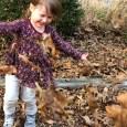Autumn Leaves via Jennifer Massoni Pardini