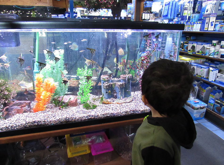 So, Your Kids Want to Get a Pet Fish: Here's What You Need to Know