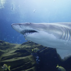 Get Up Close and Personal with Sharks