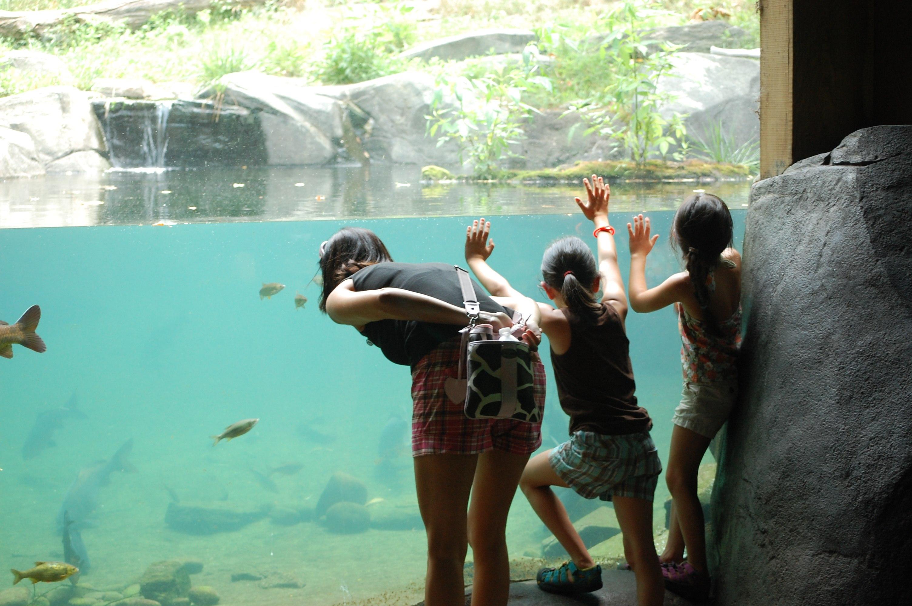 Go Wild The Bronx Zoo Has Reopened