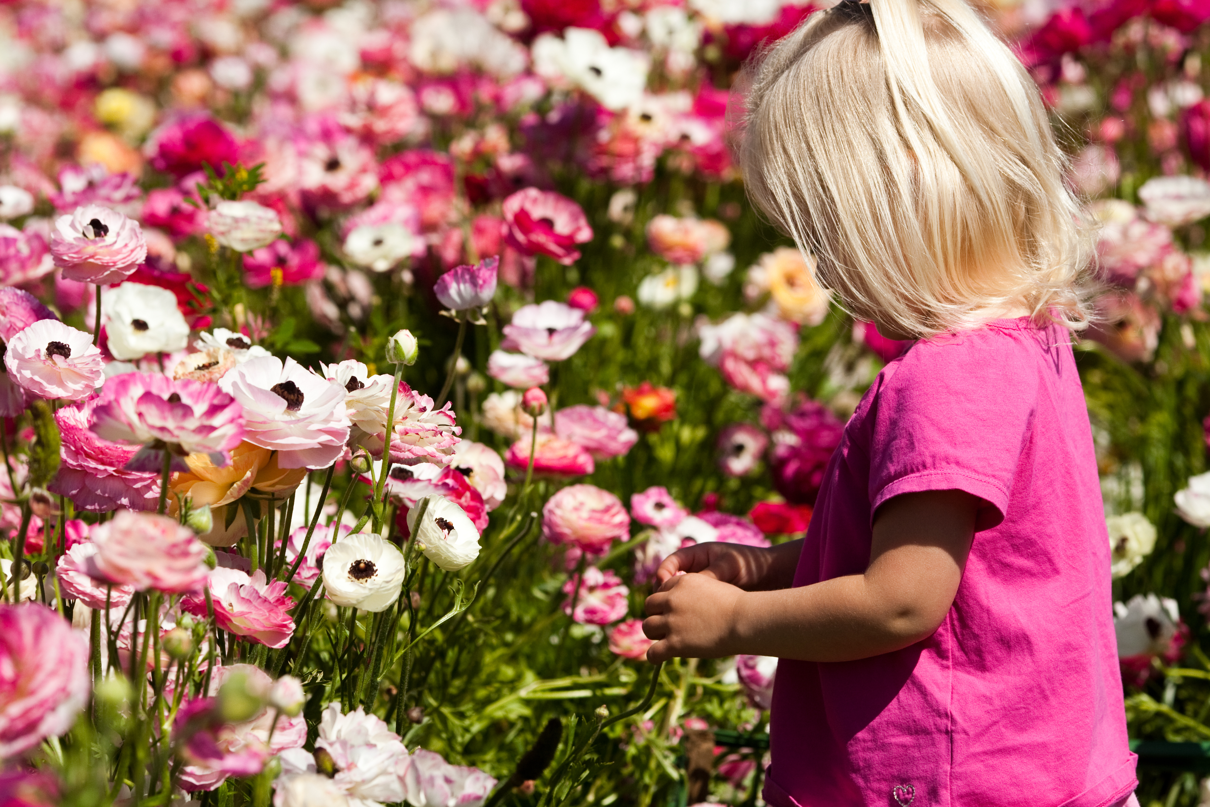 Spring Has Sprung at These 5 Botanical Gardens