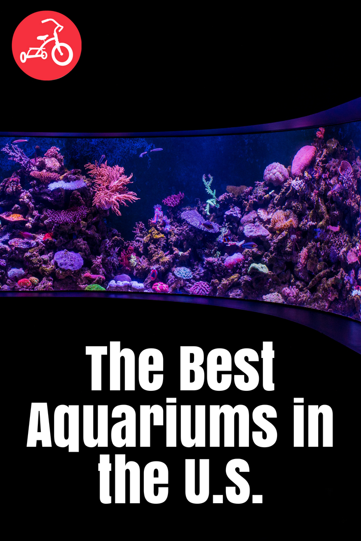 The Best Aquariums in the U.S.