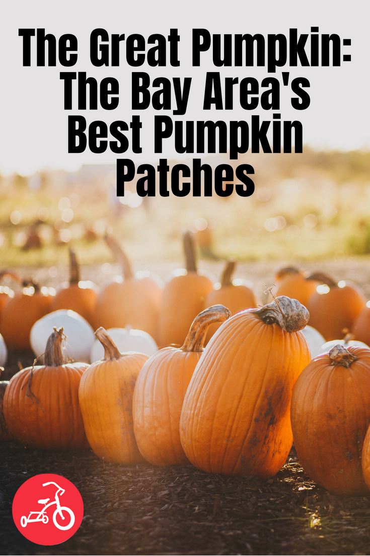 The Great Pumpkin: The Bay Area's Best Pumpkin Patches