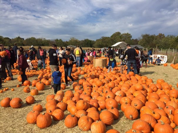 Halloween Festivals 2020 Melville Ny Best NYC Pumpkin Patches | 2020