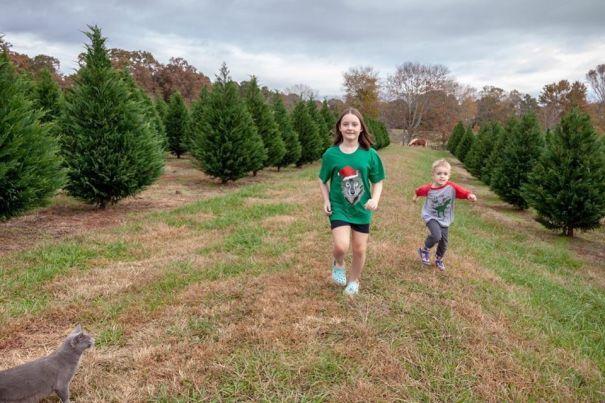 Cut Your Own Christmas Tree Farms Near Atlanta
