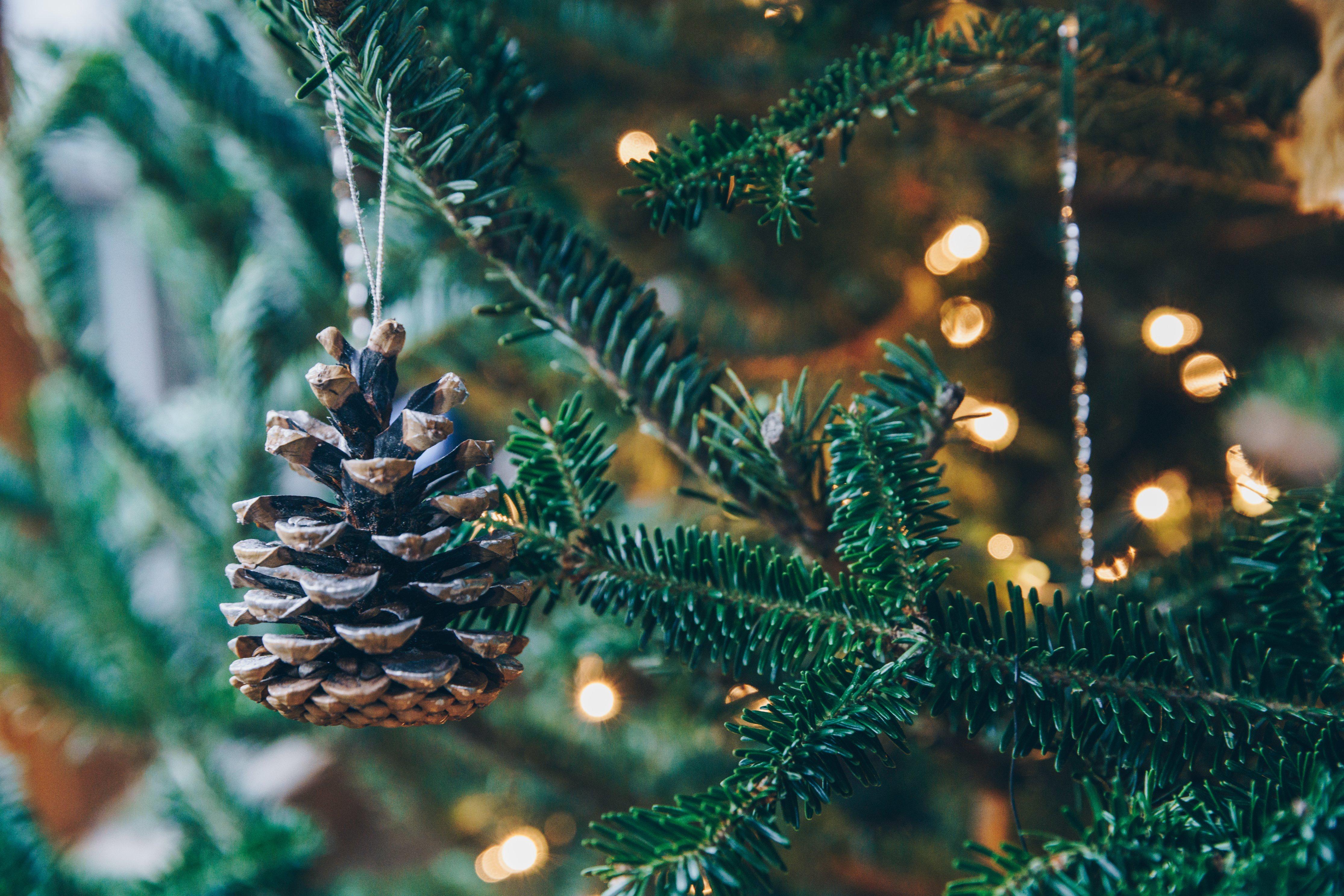 Farewell Fir Where To Recycle Your Christmas Tree Lights
