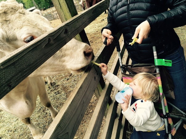 Petting Zoos and Animal Farms in the San Francisco Bay Area Near Me