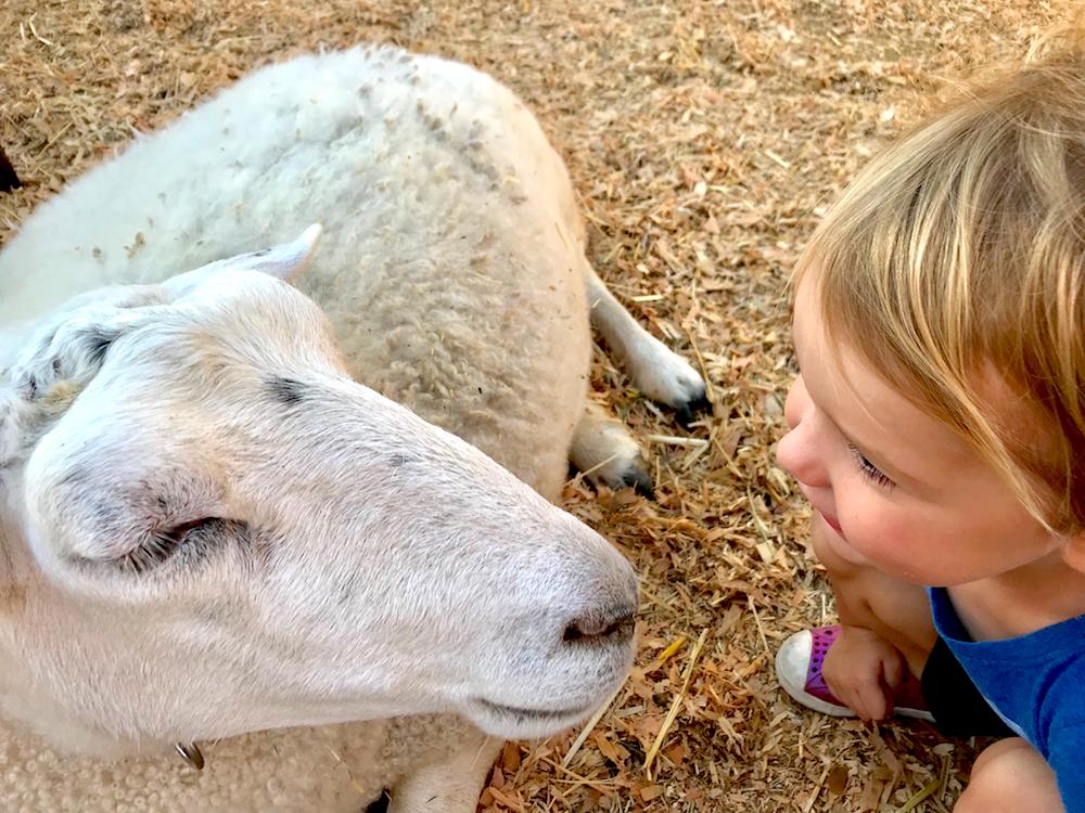 fall festival, petting zoo, animals, goat, farm, girl, picking pumpkin, farm, festival, fall, harvest, october, september
