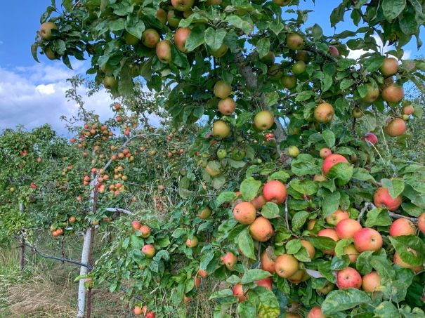 The Best Orchards To Pick Your Own Apples In Washington