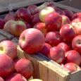 applefest, apple cider, apple barrel, fall festival