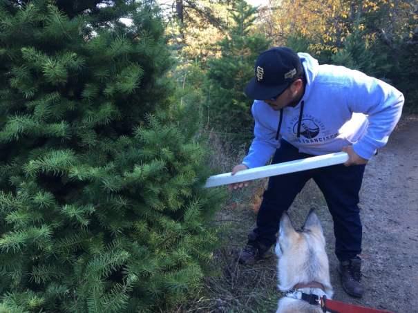 Best U-Cut Christmas Tree Farms in the SF Bay Area