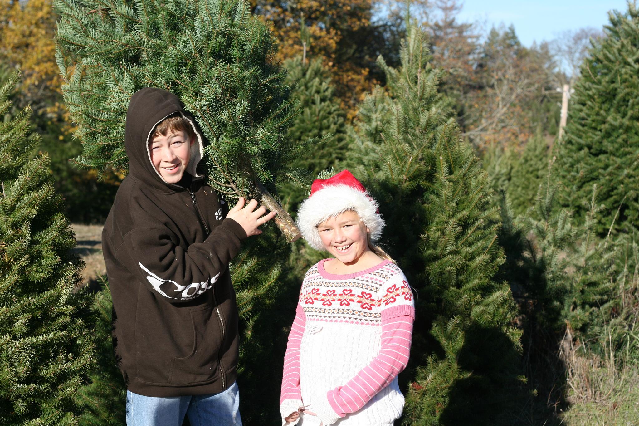 7 Best Christmas Tree Farms Near Dallas, Texas