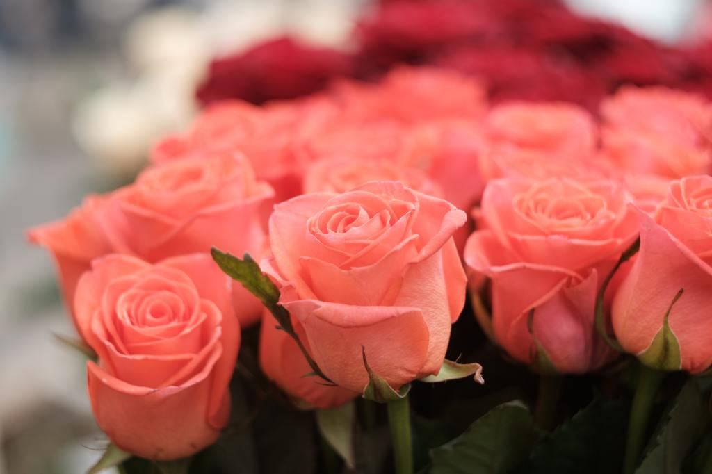 Costco S 2021 Valentine S Day Rose Sale Has Arrived