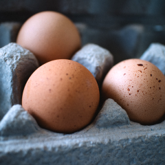 egg carton, eggs, farm, dairy, local