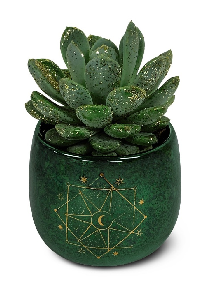 Star Gazing Succulents
