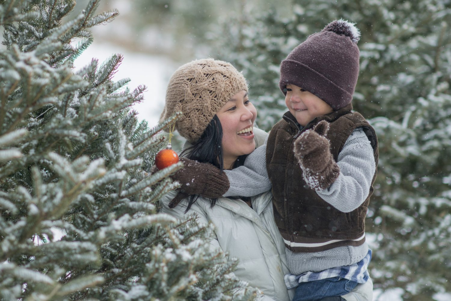 Oh Christmas Tree 10 Places To Cut Down Your Tree This Season