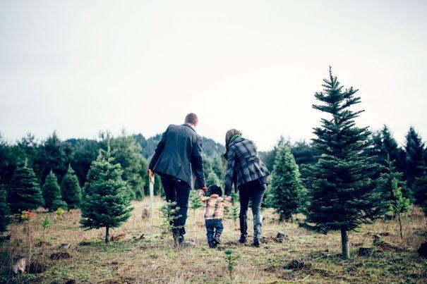 Timber! U-Cut Christmas Tree Farms Near San Diego