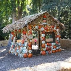 pumpkin house los angeles best halloween kid activities